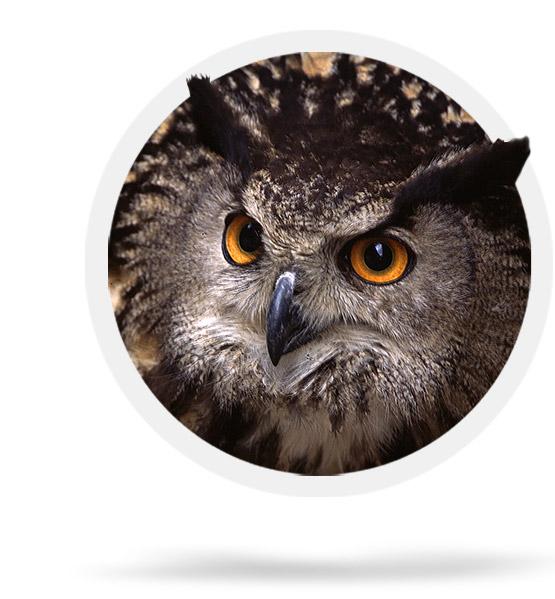 The Eurasian Eagle owl in Els Ports