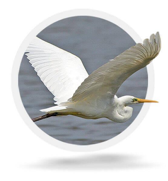 Master list of birds at the Delta: 2.0 version