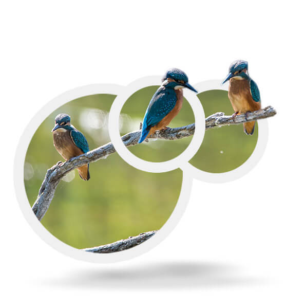The life of Kingfisher