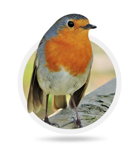 Els ocells del barranc de la Dòvia
