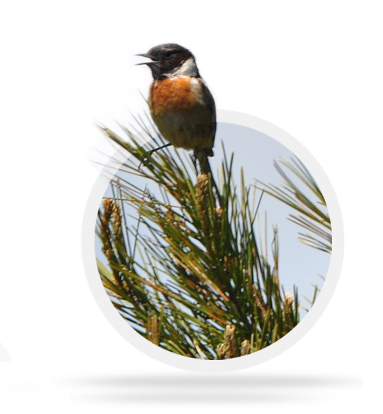 Observación de aves en la Sierra de Llaberia
