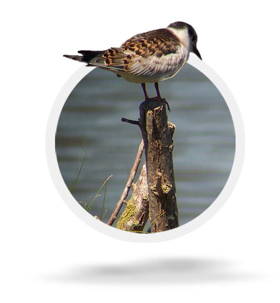 Voluntariado ornitológico