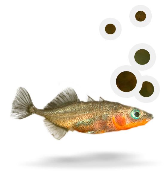 Atles de peixos del delta