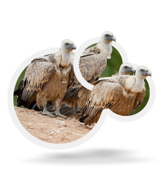 Itineraris ornitològics al PN dels Ports