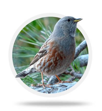 Birdwatching from Caro