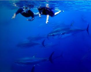 Tuna-tour Experience