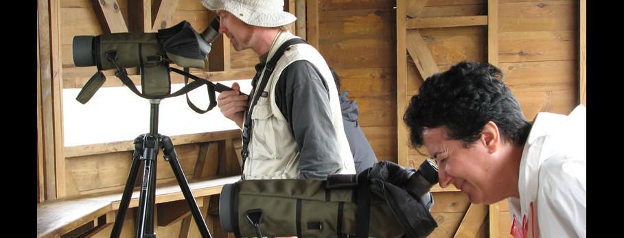 Observació d'aus Delta de l'Ebre