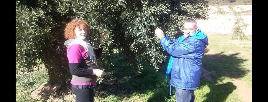 tardor-mon-oliva