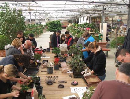 bonsai-tour-bonsai-experience